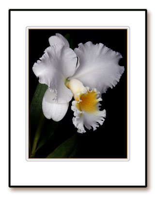 Dick McRill Orchids, Photographs, and Birds by Dick McRill